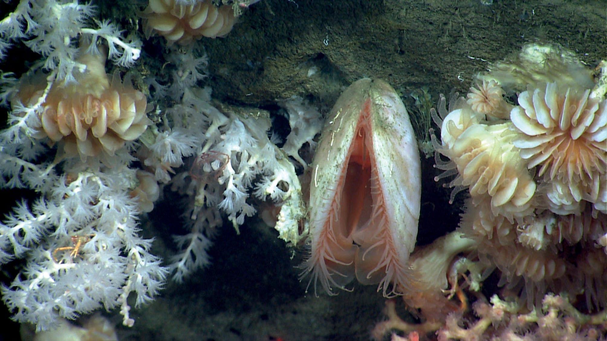 NOAA Ocean Explorer: Northeast US Canyons 2013