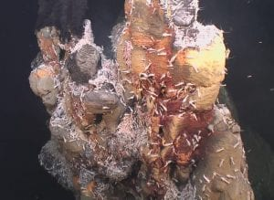 Hydrothermal vent fauna MAR