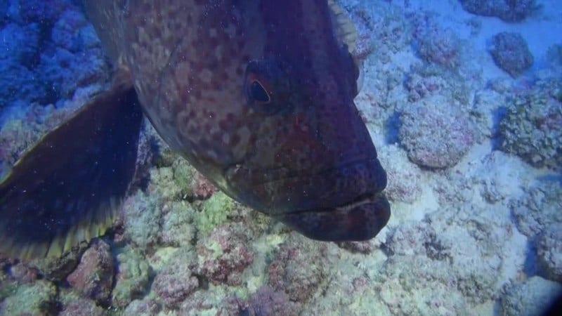 VTC Fish